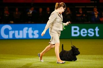 DO NOT STRIP REBECCA CROSS OF HER BEST IN SHOW WIN AT CRUFTS 2015 FOR HARSH HANDLING