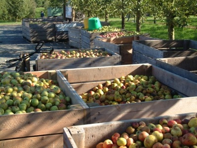 Protect small cider producers