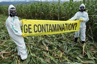 Review court decision that allows GM farmers to contaminate organic crops