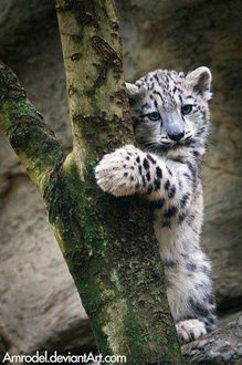 Save The Snow Leopards!!!