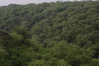 Save Mangar Bani Forest Faridabad (Delhi NCR'S last Virgin Forest)