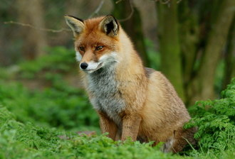 Derek Thomas please pledge to vote to keep the Hunting Act 2004 in place.