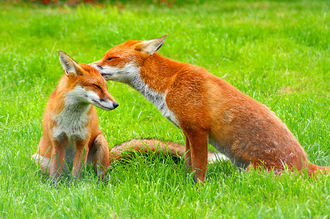 Chris Skidmore - Vote to keep the ban on fox hunting