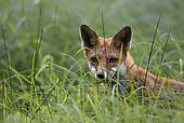 People of Bedfordshire against fox hunting