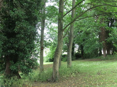 SAVE 40 HEALTHY TREES FROM BEING FELLED IN CASTLEFIELDS PARK