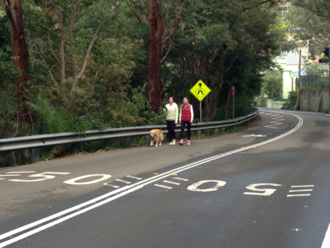 Lives at risk on Bradleys Head Road - Need for Pedestrian Walkway to Zoo Ferry