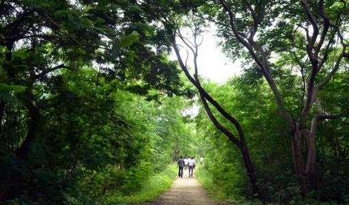 Save 274 acres of Botanical Garden reserve forest land from Eco-tourism project