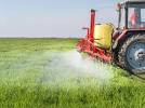 Ban weed  killer Glyphosate  sprayed on wheat just before it is harvested