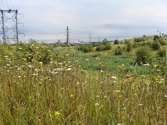 Save Swanscombe Marshes - Say NO to London Paramount