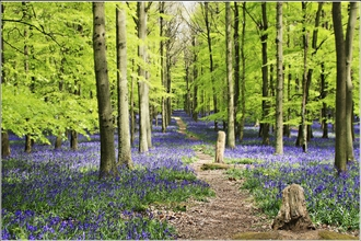 PROTECT OUR NATIVE WOODLANDS - DO NOT PLANT IMPORTED TREES