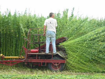 Fully Decriminalize Industrial  Hemp