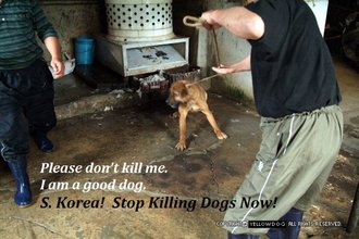 Stop the torture and consumption of dogs in S.Korea.