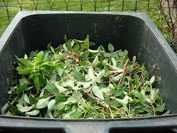Add green waste to recycling collections in Brighton