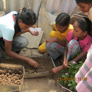 Eco urban gardens for every school