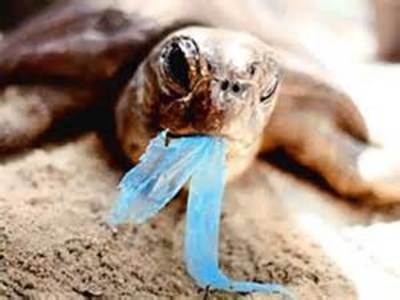 Reduce the Use -  plastic bag pollution