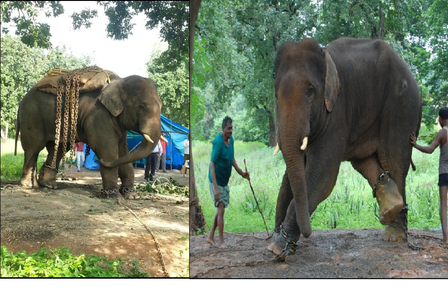 Save young Appu! Take action to rescue him so he can be released into the wild.
