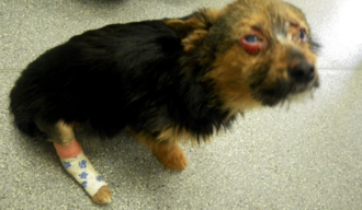 Review the lenient sentences handed down for the torture of Chunky the chihuahua
