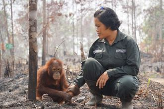Stop the catastrophic destruction for Palm oil
