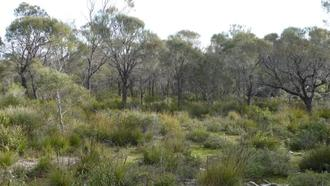 Prevent the clearance of important native vegetation in Coffin Bay, South Australia.