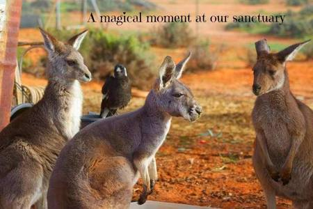 Save the Menindee Lakes Animal Sanctuary