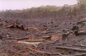 Protect High Quality Food Producing Land and Rural Communities from Timber Plantations