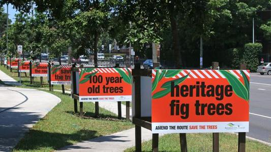 More Trees Needed to Compensate For the Loss of Randwicks Historical Trees