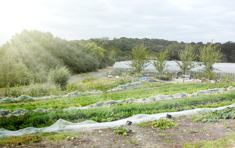 London Mayor - Protect and Provide Land in London for Food Growing