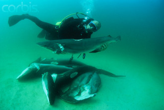 Ban The Sale Of Shark Fins Inside The United States