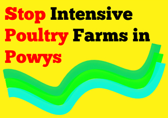 #CluckOff - Say No to Factory Chicken Farms near Hay