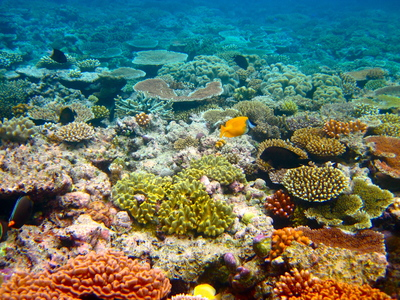 Coal or Coral? Let's have a Great Barrier Reef election debate