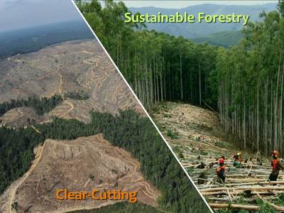 Ban Clearcutting in Tuolumne County