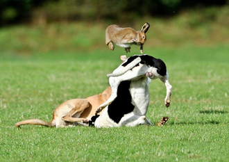 Support the Bill to ban hare coursing in Ireland
