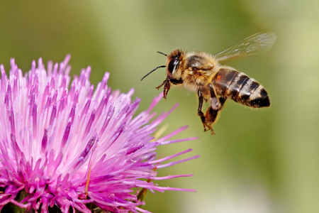 Increase the Bee population - Grants for beekeepers
