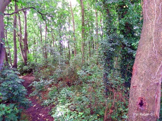 Save Ainsdale's (Kitty's Wood) George Drive woodland