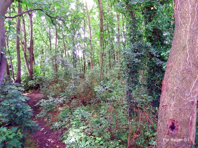 Save Ainsdale's (Kitty's Wood) George Drive woodland.