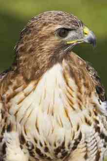Overturn the decision to allow gamekeeper to shoot and kill buzzards