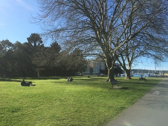 Save Rushcutters Bay open space? No new developments at Rushcutters Bay Park
