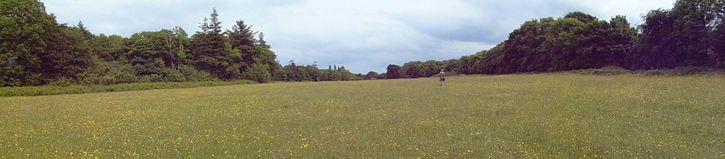 Save The Meadows , Merlin Park Galway