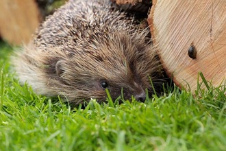 Ban slug pellets that kill hedgehogs and pets