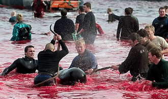 Stop the Dolphin Slaughter in the Feroe Islands, Denmark .