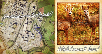 Greetings from sellafield   save the sellafield deer