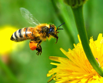Immediately withdraw all pesticides linked with the collapse of UK bee colonies and ecosystems