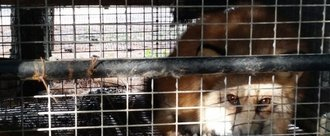 Escale France: Stop Selling REAL Fur