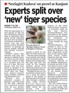 Need your Urgent Support to Save the Neelagiri Kaduva 8 th Big Cat in the world, as big as  Tiger