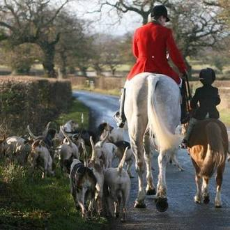 Demand a referendum against Hunting with dogs