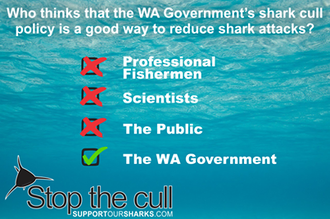 Stop the Shark Culling