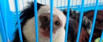 End The Exotic Pet Trade in Wales.
