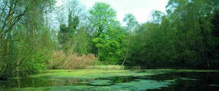 Save C.S. Lewis Nature Reserve