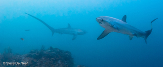 Revise Senate Bill 905, Pass the Shark and Ray Protection Act