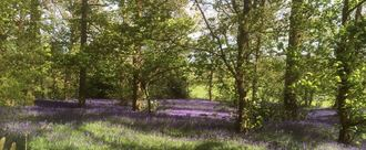 Stop proposed Cuts to Birmingham Country Parks from 6 maintained parks to 2 !!!